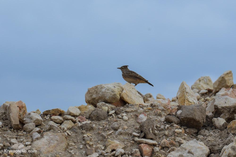 Птица в Оленевке